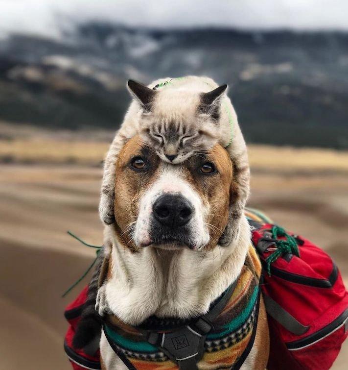 pes a kočka, pes, vs, versus, porovnání, pes, se psem, a kočkou, cestování, přátelství, společný, chov, zvířat, výcvik, výchova, kočka se psem, pes s kočkou 4