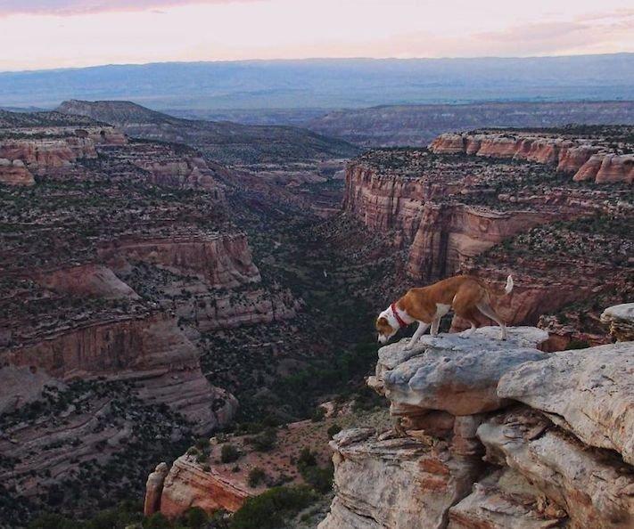 pes a kočka, pes, vs, versus, porovnání, pes, se psem, a kočkou, cestování, přátelství, společný, chov, zvířat, výcvik, výchova, kočka se psem, pes s kočkou 5