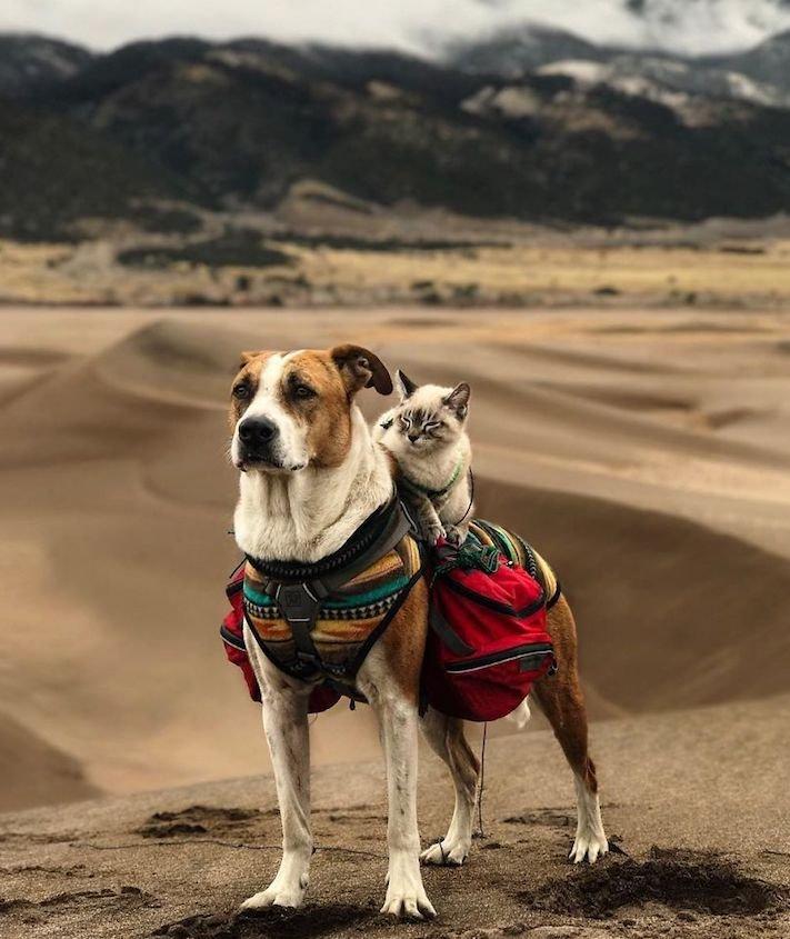 pes a kočka, pes, vs, versus, porovnání, pes, se psem, a kočkou, cestování, přátelství, společný, chov, zvířat, výcvik, výchova, kočka se psem, pes s kočkou 7