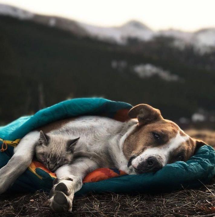 pes a kočka, pes, vs, versus, porovnání, pes, se psem, a kočkou, cestování, přátelství, společný, chov, zvířat, výcvik, výchova, kočka se psem, pes s kočkou 8