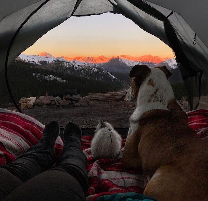 pes a kočka, pes, vs, versus, porovnání, pes, se psem, a kočkou, cestování, přátelství, společný, chov, zvířat, výcvik, výchova, kočka se psem, pes s kočkou 9