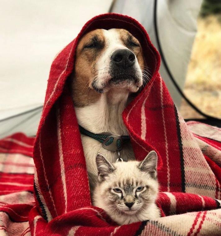 pes a kočka, pes, vs, versus, porovnání, pes, se psem, a kočkou, cestování, přátelství, společný, chov, zvířat, výcvik, výchova, kočka se psem, pes s kočkou 11