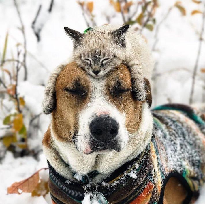 pes a kočka, pes, vs, versus, porovnání, pes, se psem, a kočkou, cestování, přátelství, společný, chov, zvířat, výcvik, výchova, kočka se psem, pes s kočkou 12