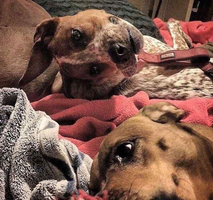 zvláštní, podivné, pozoruhodné, fotografie, fotky, fotoalbum, obrázky, psa, psů, psi, psy, pes 1