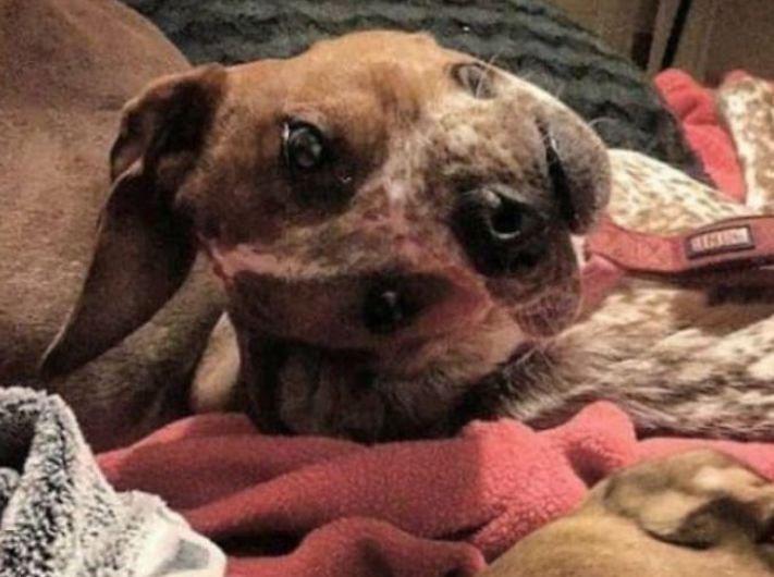 zvláštní, podivné, pozoruhodné, fotografie, fotky, fotoalbum, obrázky, psa, psů, psi, psy, pes 2