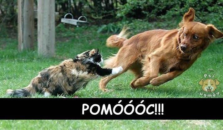 kočky, psi, kočka, vs, versus, pes, souboj, soužití, společný, chov, příběhy, psů, koček 4