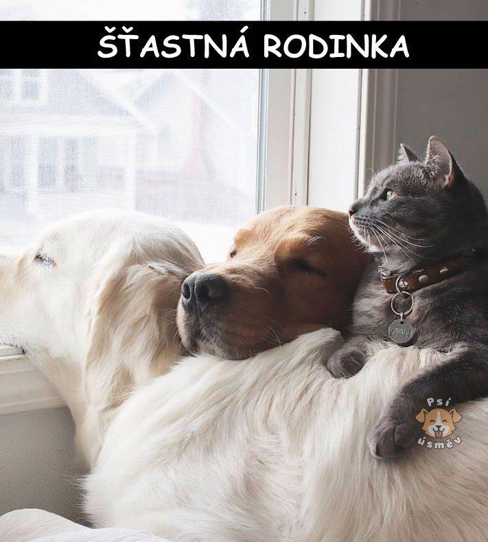 kočky, psi, kočka, vs, versus, pes, souboj, soužití, společný, chov, příběhy, psů, koček 5