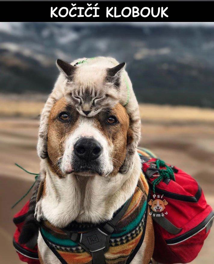kočky, psi, kočka, vs, versus, pes, souboj, soužití, společný, chov, příběhy, psů, koček 6