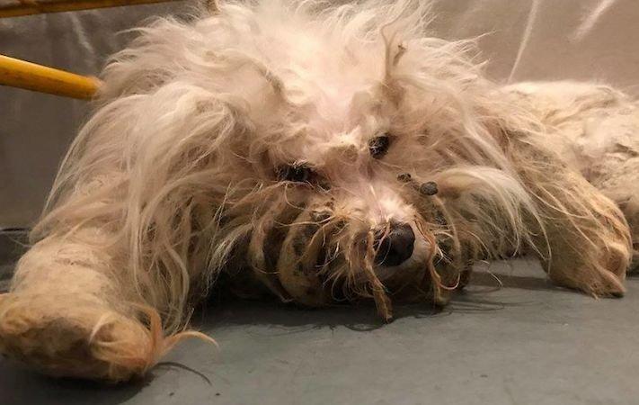 psí příběh, příběh, o psovi, příběhy o psech, záchrana, psa, zanedbaný, pes, kožní, problémy, srst, péče o srst 1