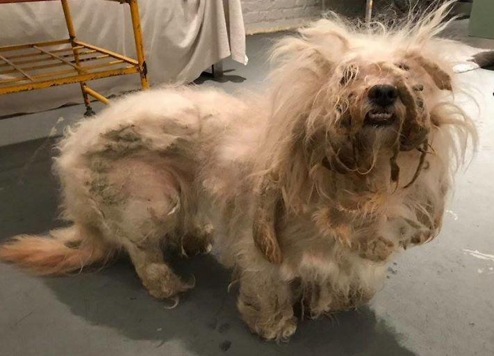 psí příběh, příběh, o psovi, příběhy o psech, záchrana, psa, zanedbaný, pes, kožní, problémy, srst, péče o srst 6