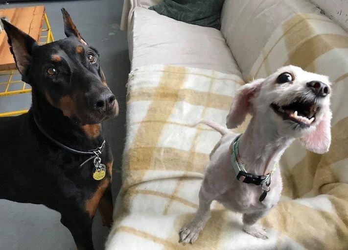 psí příběh, příběh, o psovi, příběhy o psech, záchrana, psa, zanedbaný, pes, kožní, problémy, srst, péče o srst 10