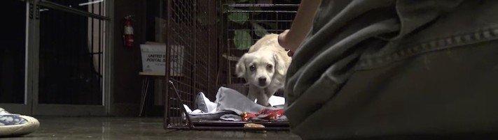 záchrana, psa, fenky, feny, fena, pes, záchranná, akce, záchranné, akce, psů, zachraňování, pomoc, psům, nekupujadoptuj, nekupuj, adoptuj, adopce, útulky, video, psí příbeh 6