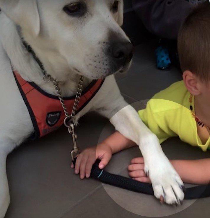 canisterapie, labrador, pomoc, autismus, autisti, nejlepší, lék, pes, psí příběh, příběhy se psy, příběhy o psech 2