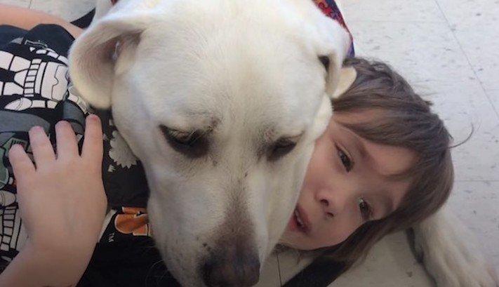 canisterapie, labrador, pomoc, autismus, autisti, nejlepší, lék, pes, psí příběh, příběhy se psy, příběhy o psech 3