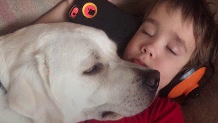 canisterapie, labrador, pomoc, autismus, autisti, nejlepší, lék, pes, psí příběh, příběhy se psy, příběhy o psech 4