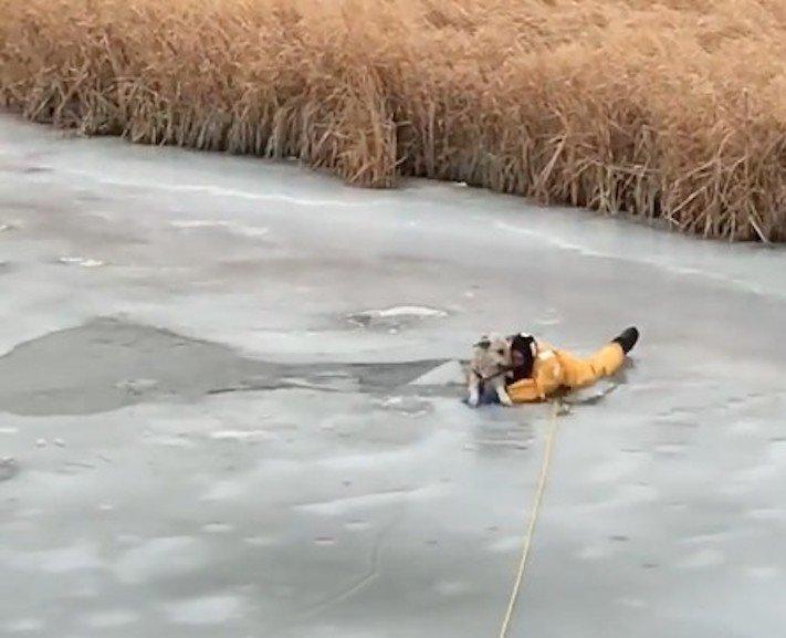 pomoc, záchrana, psa, z vody, ledu, led, propadlý, v ledě, v ledu, proud vody, záchranná akce, příběhy o psech, video 2