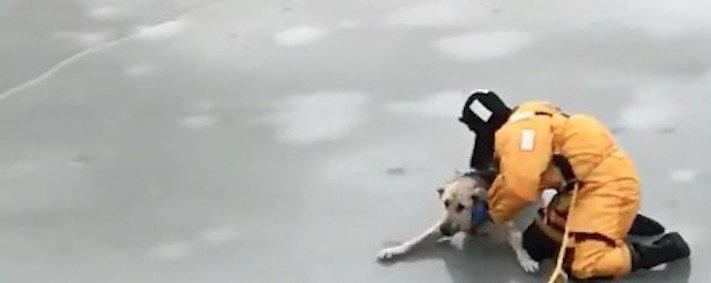 pomoc, záchrana, psa, z vody, ledu, led, propadlý, v ledě, v ledu, proud vody, záchranná akce, příběhy o psech, video 4