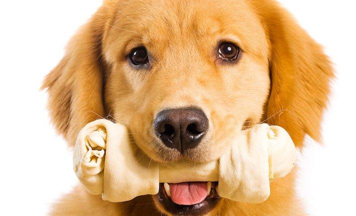vánoční dárek, pro psa, vánoční, dárky, pro psy, pes, psí dárky, dárečky, nápady, tipy, fotografie, diy, obrázky, nápad, rady, tip 5
