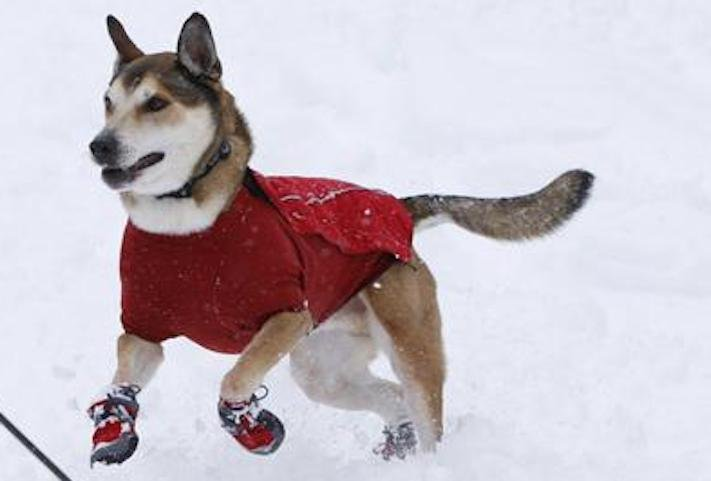 vánoční dárek, pro psa, vánoční, dárky, pro psy, pes, psí dárky, dárečky, nápady, tipy, fotografie, diy, obrázky, nápad, rady, tip 7