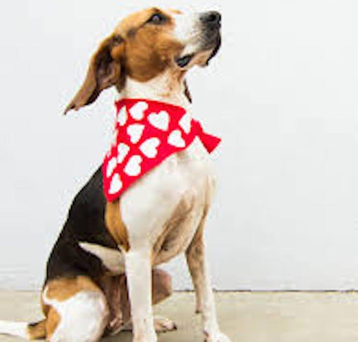 vánoční dárek, pro psa, vánoční, dárky, pro psy, pes, psí dárky, dárečky, nápady, tipy, fotografie, diy, obrázky, nápad, rady, tip 10