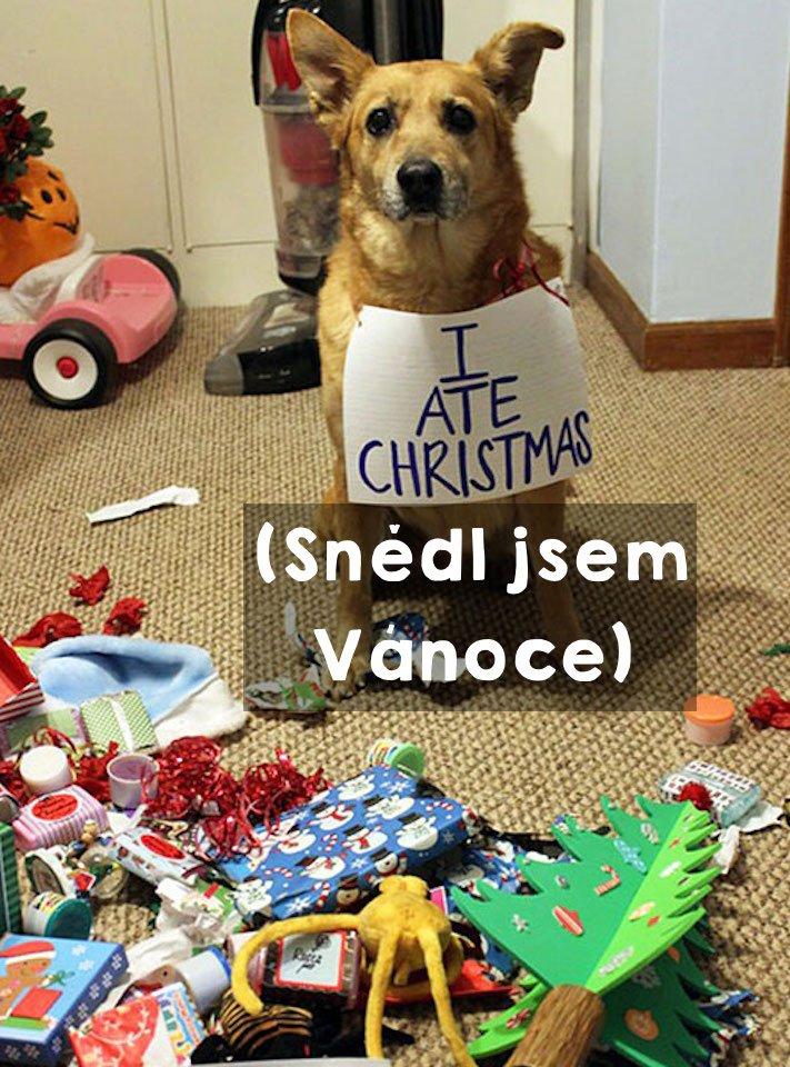vánoční, obrázky, psů, se psy, psi, pes, fotky, fotografie, vánoční, stromek, zničený, spadlý, zábavné, vtipně, nejzábavnější, fotoalbum 4