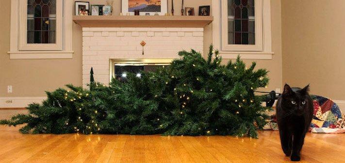 vánoční, obrázky, psů, se psy, psi, pes, fotky, fotografie, vánoční, stromek, zničený, spadlý, zábavné, vtipně, nejzábavnější, fotoalbum 8