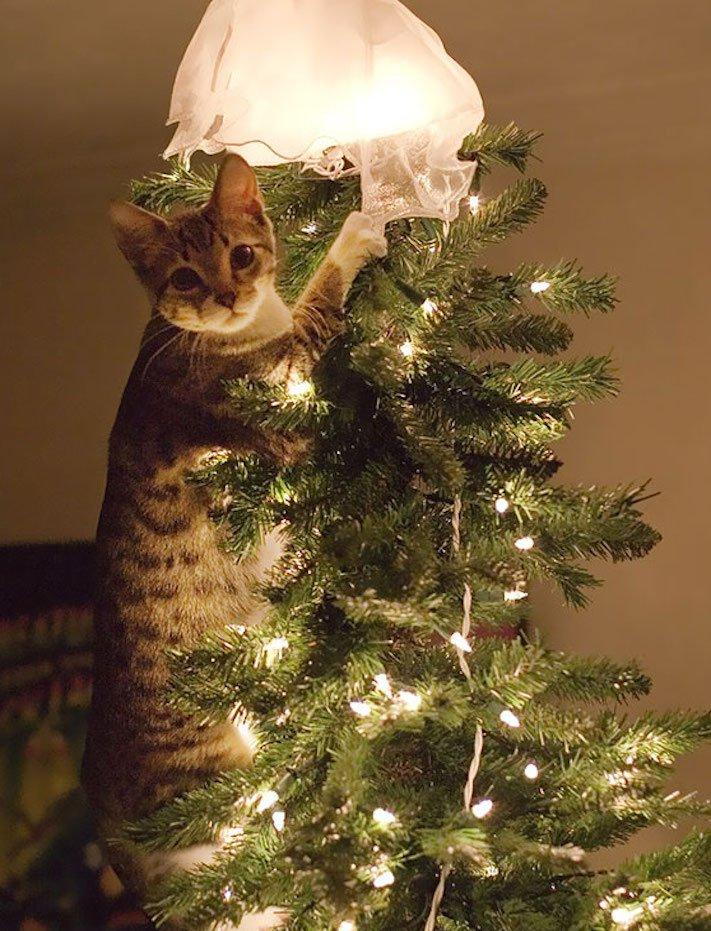 vánoční, obrázky, psů, se psy, psi, pes, fotky, fotografie, vánoční, stromek, zničený, spadlý, zábavné, vtipně, nejzábavnější, fotoalbum 10