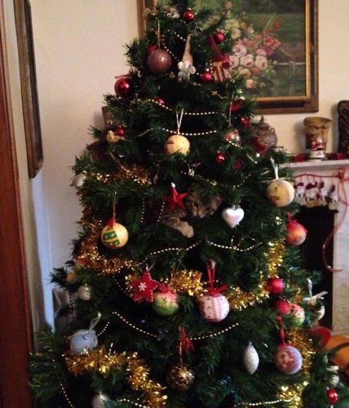 vánoční, obrázky, psů, se psy, psi, pes, fotky, fotografie, vánoční, stromek, zničený, spadlý, zábavné, vtipně, nejzábavnější, fotoalbum 11
