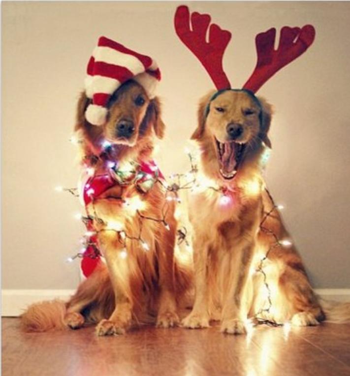 vánoce, 2017, 2018, pf, se psem, psí, vánoce, vánoční, dárky, pohoda, obrázky, fotoalbum, zábavné, vtipné, vánoční obrázky, fotky, fotografie 2
