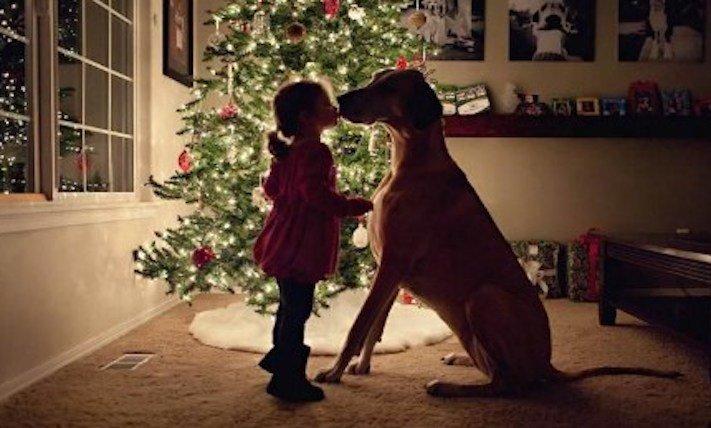 vánoce, 2017, 2018, pf, se psem, psí, vánoce, vánoční, dárky, pohoda, obrázky, fotoalbum, zábavné, vtipné, vánoční obrázky, fotky, fotografie 3