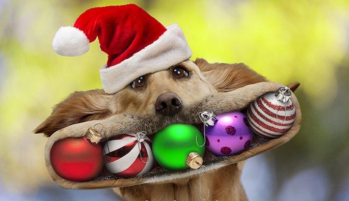 vánoce, 2017, 2018, pf, se psem, psí, vánoce, vánoční, dárky, pohoda, obrázky, fotoalbum, zábavné, vtipné, vánoční obrázky, fotky, fotografie 4