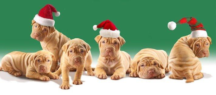 vánoce, 2017, 2018, pf, se psem, psí, vánoce, vánoční, dárky, pohoda, obrázky, fotoalbum, zábavné, vtipné, vánoční obrázky, fotky, fotografie 5