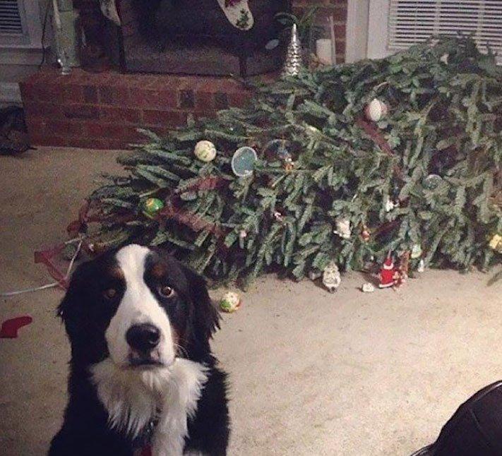 vánoce, 2017, 2018, pf, se psem, psí, vánoce, vánoční, dárky, pohoda, obrázky, fotoalbum, zábavné, vtipné, vánoční obrázky, fotky, fotografie 10