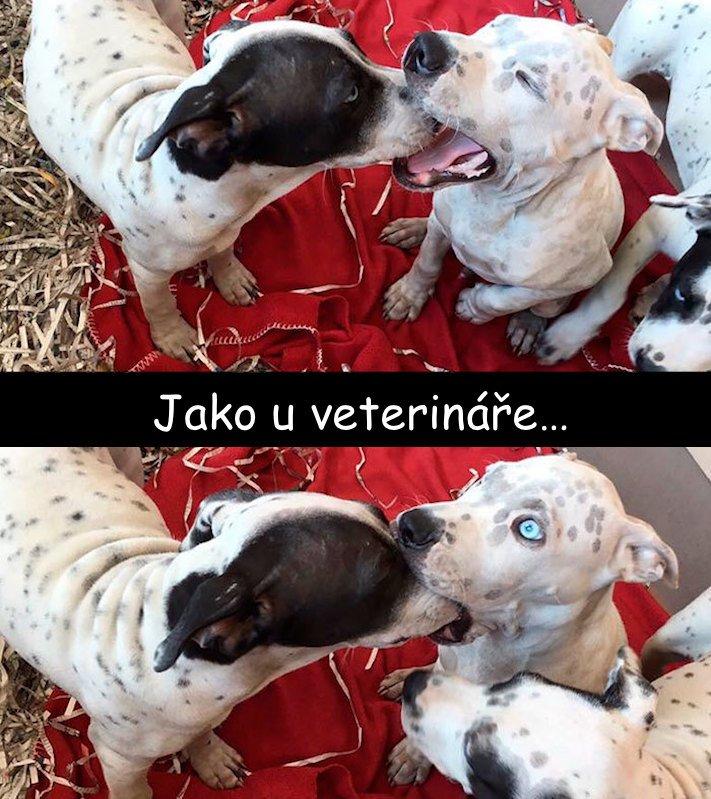 nejvtipnější, obrázky, fotografie, fotky, se psy, se psem, psí, obrázek, fotoalbum, psů, vtipy, zábava, štěňata 3