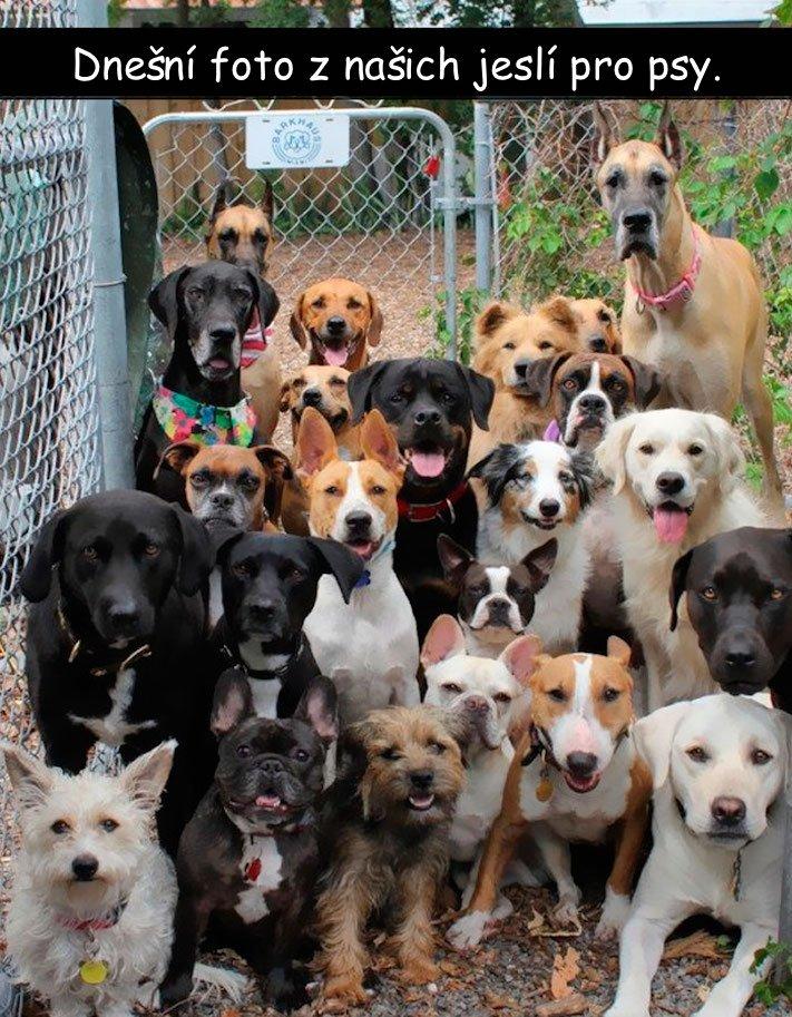 nejvtipnější, obrázky, fotografie, fotky, se psy, se psem, psí, obrázek, fotoalbum, psů, vtipy, zábava, štěňata 5