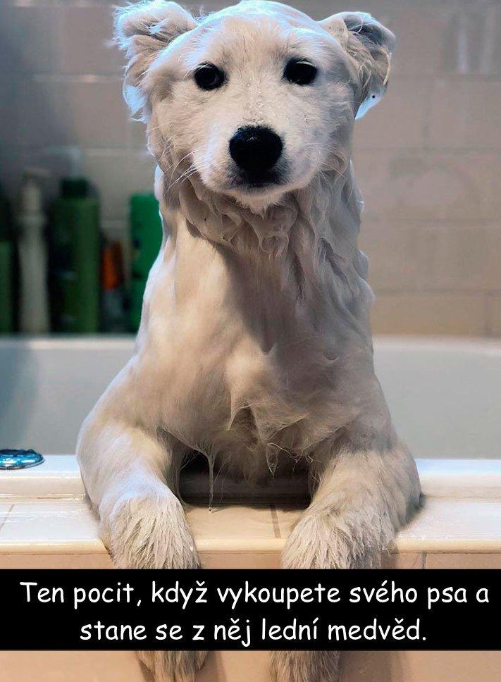 nejvtipnější, obrázky, fotografie, fotky, se psy, se psem, psí, obrázek, fotoalbum, psů, vtipy, zábava, štěňata 7