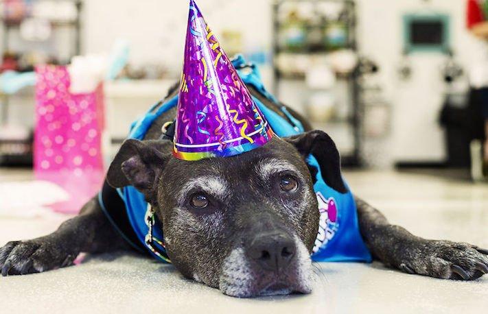 starý, pes, oslava, narozenin, výhra, peníze, soutěž, kayla, důchodce, starší, fena 1