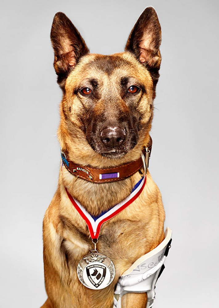 5 případů, kdy psi překvapili své majitele hrdinským činem 1