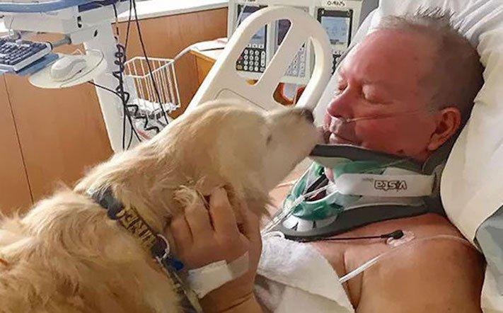 5 případů, kdy psi překvapili své majitele hrdinským činem 3