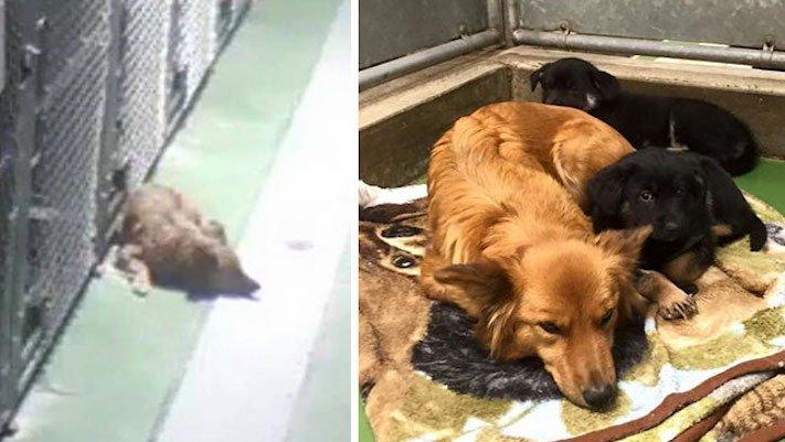 5 případů, kdy psi překvapili své majitele hrdinským činem 4