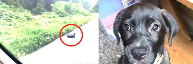 Žena viděla na ulici odpadkový pytel, který se hýbal. Poté nevěřila vlastním očím, musela rychle pomoct!