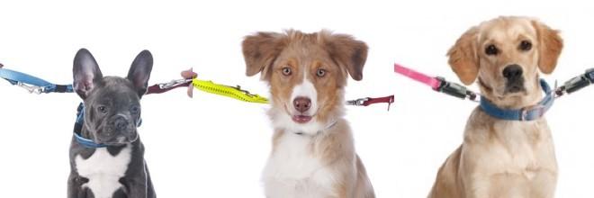 Pes po rozvodu, existuje střídavá péče?