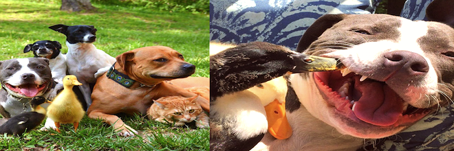 Zachránili 7 zvířat, takhle dnes žijí! ツ