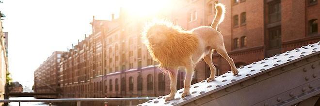 """Čtyřnohý bezdomovec """"byl předurčen stát se lvem"""""""