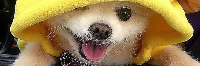 Když psí útulek vyzval lovit pokémony s jejich psy, takový výsledek rozhodně nečekal