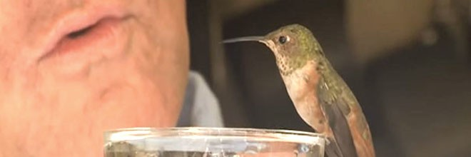 Přeživší kolibřík odmítal opustit psa, který mu zachránil život