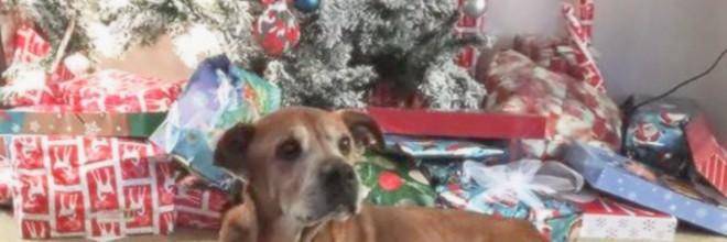Mladý pár před Vánoci navštívil útulek, aby daroval drobný příspěvek, ale nakonec adoptoval 17ti letého psa