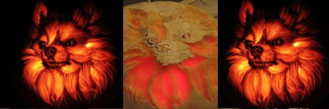 Na Halloween jsem do dýně vyřezal svého pomeraniana Sof