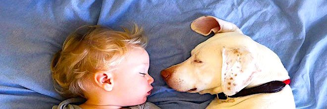 Týraný pes se bojí naprosto všeho, kromě tohoto dítě, jejich fotografie nás zahřály u srdce