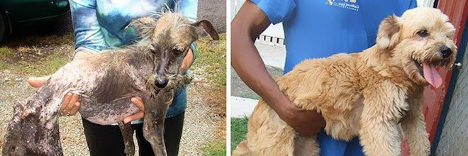 5+ PŘED a POTÉ: Proměny zachráněných psů